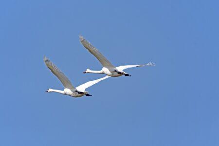 Черно-белые птицы