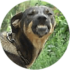 user_1225_avatar